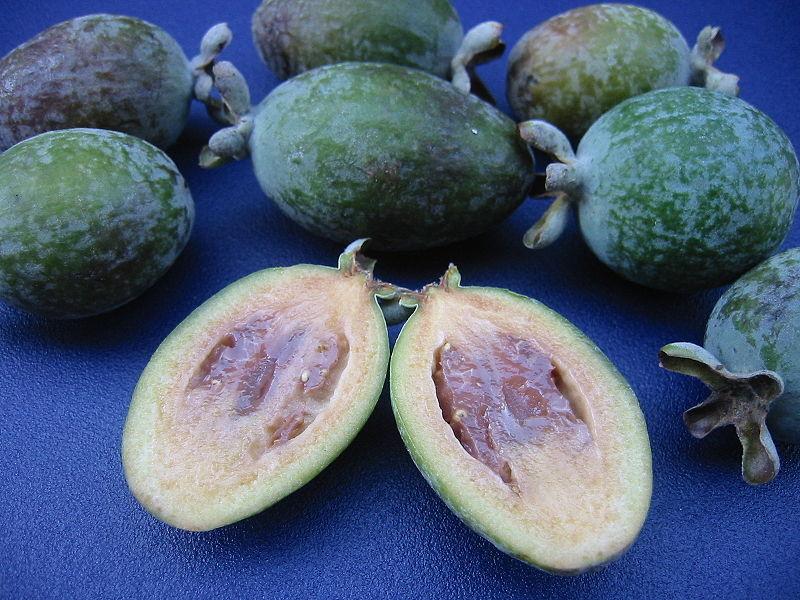 pregnancy nutrition guavas